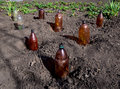 The use of plastic bottles to protect the seedlings at their summer cottage Royalty Free Stock Photo