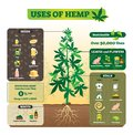 Uses of hemp vector illustration. Seeds, leaf, flower, root and stalk use. Royalty Free Stock Photo