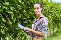 Using digital tablet in nature woman vineyard Stock Image