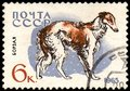 USSR - CIRCA 1965: postage stamp, printed in USSR, shows a borzoi dog, series Hunting and Service Dogs Royalty Free Stock Photo