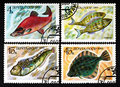USSR - CIRCA 1983- a series of stamps printed in USSR, shows fishes, CIRCA 1983