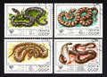 USSR - CIRCA 1977- a series of stamps printed in USSR, shows snakes, CIRCA 1977