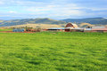 Utah dairy farm summer landscape at a in heber valley usa Stock Photography