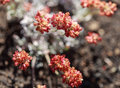 Utah wasatch mountain wildflowers closeup photo of taken in the mountains of usa Stock Photography