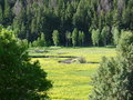 Utah wasatch mountains peaceful quiet mountain river flowing through a field Stock Images