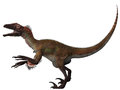 Utahraptor was first found utah and was a carnivore that hunted in packs in the cretaceous period Stock Image