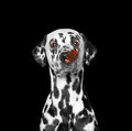 Ð¡ute dog looks at butterfly at his nose Royalty Free Stock Photo