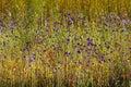 Utricularia delphinoides mix green grass