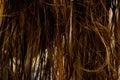 Vått hår Arkivfoton