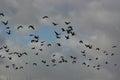 Vögel die in den himmel fliegen Lizenzfreie Stockfotografie