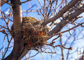 Vacant bird s nest a birds in a pear tree photographed in the winter Stock Photo
