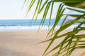 Vacation background. Beach with palm trees and blue sea Royalty Free Stock Photo