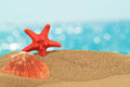Vacation background with seashell and starfish Royalty Free Stock Photo