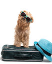 Vacation for dog ready on white background Stock Photos