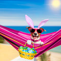 Vacation easter dog Royalty Free Stock Photo