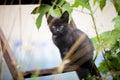 Vagrant cat Royalty Free Stock Photo