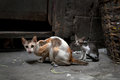 Vagrant cats homeless wild on dirty street in asia Stock Photography