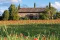 Val d orcia tuscany italy may poppy field in tuscany on m Royalty Free Stock Photos