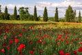 Val d orcia tuscany italy may poppy field in tuscany on m Stock Photos