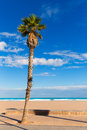 Valencia beach palm trees in patacona malvarrosa las arenas of alboraya spain Royalty Free Stock Images
