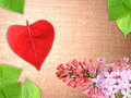 Valentine background with flowers and leaf Royalty Free Stock Photography