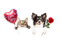 Valentine Cat and Dog Hanging Over Sign Royalty Free Stock Photo