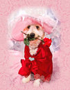 Valentine Doggie Stock Photo