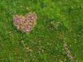 Valentine heart made of fresh flowers shape and natural on a spring meadow conceptual design Stock Image