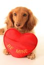 Valentine puppy Royalty Free Stock Photo