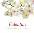 Valentine s day blooming orchid symbol of love card border design with space for your text Royalty Free Stock Photo