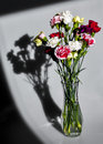Valentine's day flowers in natural light and shadow Royalty Free Stock Photo