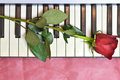 Valentines Day card with a rose on piano keys Royalty Free Stock Photo