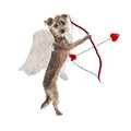 Valentines Day Cupid Dog Royalty Free Stock Photo