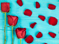 Valentines Day Traditional Red Roses Royalty Free Stock Photo