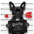 Valentines mugshot dog Royalty Free Stock Photo