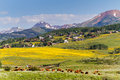 Valley covered with yellow wildflowers in colorado Stock Photos