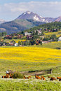 Valley covered with yellow wildflowers in colorado Stock Photo