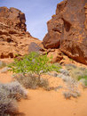 Valley of Fire flora Royalty Free Stock Photography