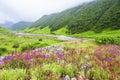 Valley Of Flowers, Uttarakhand...
