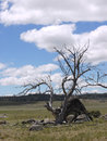 The valley near cooma in victoria in australia a phantasm australian landscape with boulders and dead trees opposite a blue sky Stock Photography