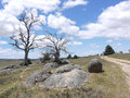The valley near cooma in victoria in australia an unsealed road a phantasm australian landscape with fields boulders and dead Stock Photo
