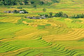 Valley of paddy waves spreading over a in the northwest vietnam Stock Image
