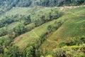 Valley of Tea Garden Royalty Free Stock Photo