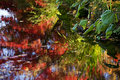 Van Dusen Garden Fall Colors Water Reflections Royalty Free Stock Photo