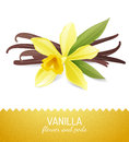 Vanilla flower and pods over white background Stock Images