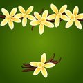 Vanilla flowers vector floral background Stock Image