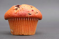 Vanilla muffin on a nice grey background with copy space to the right focus is on the front of the top Royalty Free Stock Images