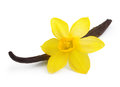 Vanilla pods and flower isolated orchid on white background Stock Photography