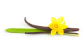 Vanilla pods and flower isolated orhid on white background Stock Photos