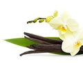Vanilla pods and flower isolated on white background Royalty Free Stock Photos